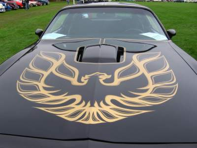 Trans Am Firebird Decal
